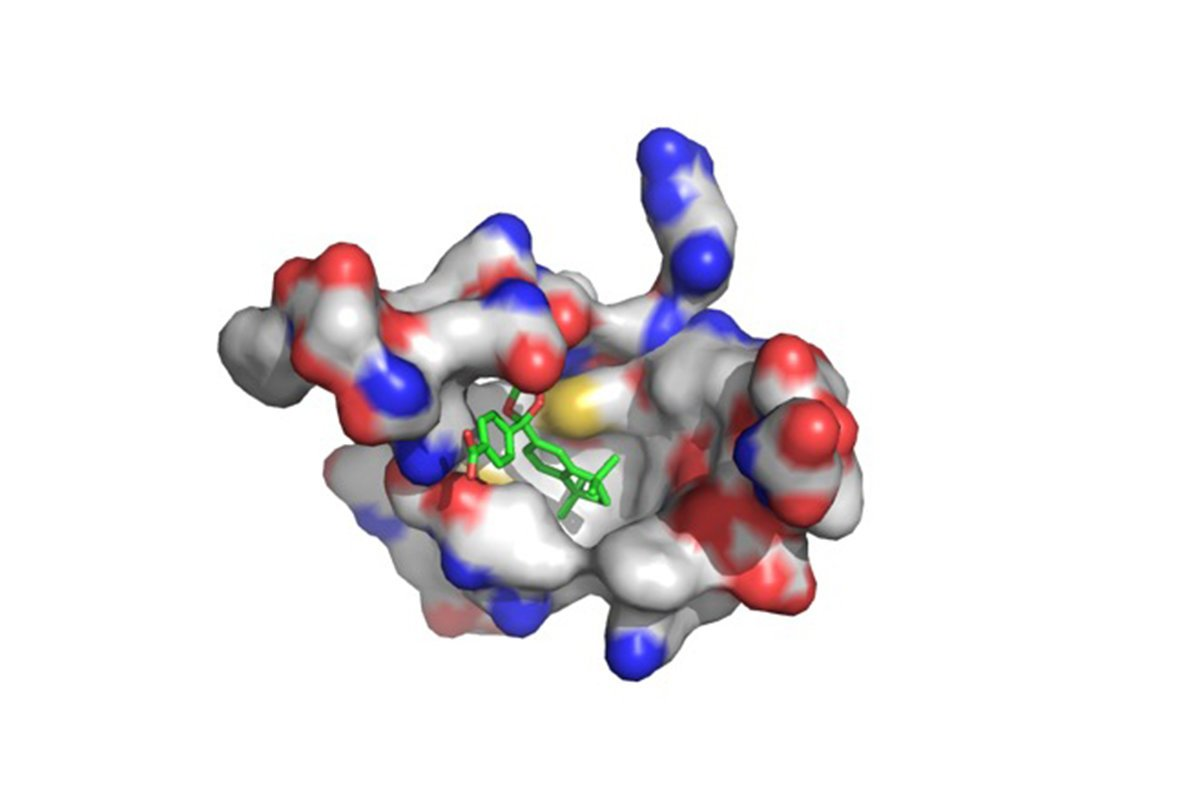 Neue Drogen-sucht-Rezeptoren in Sarkom-Zellen, Angriffe Tumoren im Tierversuch