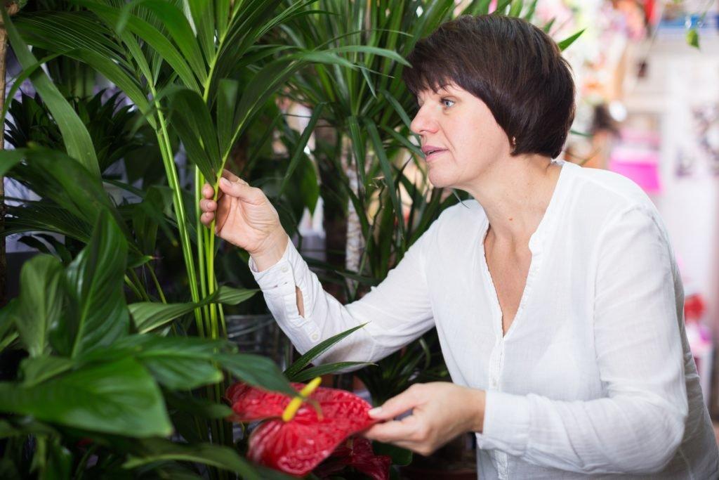 Den Fehler begehen wir fast alle im Umgang mit Garten- und Zimmerpflanzen
