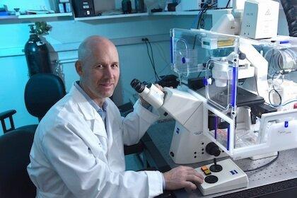 Forscher identifizieren neuen Mechanismus, um Entzündungen zu reduzieren