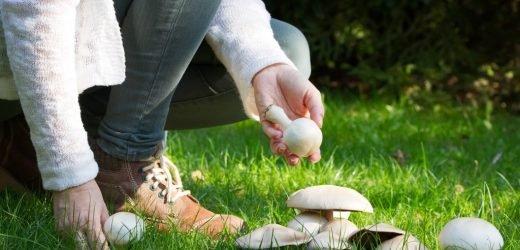 Entdeckt: Der Verzehr von Pilzen bringt unser Gedächtnis auf Trab