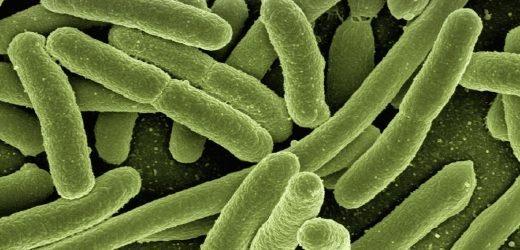 Viel versprechende neue Droge, die das Potenzial haben, zu stoppen das Fortschreiten der sepsis