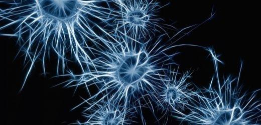 Zerebralen organoids an der air-liquid-interface generieren Nervenbahnen mit funktionellen Ausgabe