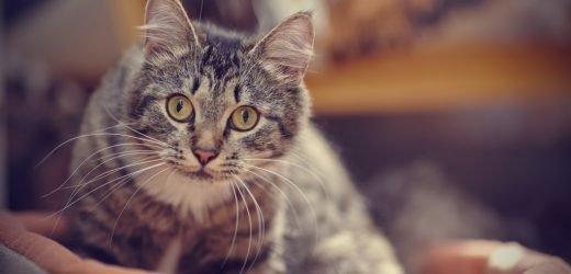 Der geheimnisvolle Patient und wie seine Katze ihn fast getötet hätte