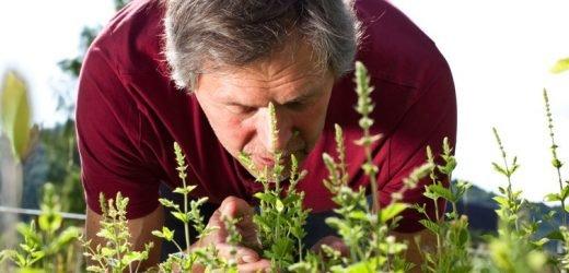 Warum ein Geruchstest Leben retten könnte