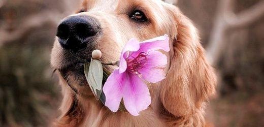 Ein Leitfaden Für Anfänger Mit Aromatherapie Für Hunde – Holen! Pet Care