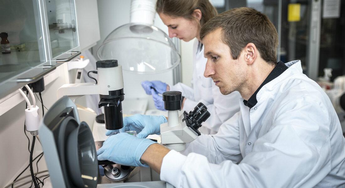 Antibiotika hemmen können Haut-Lymphom