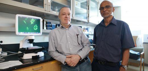 Die Tötung der Samen von Krebs: Eine neue Erkenntnis zeigt Potenzial bei der Zerstörung von Krebs-Stammzellen