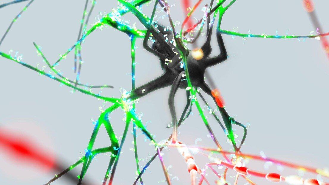 Die Art und Weise ein einzelnes neuron Informationen verarbeitet werden, ist nie die gleiche