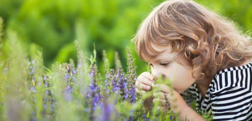Lavendel lässt Kindern Brüste wachsen