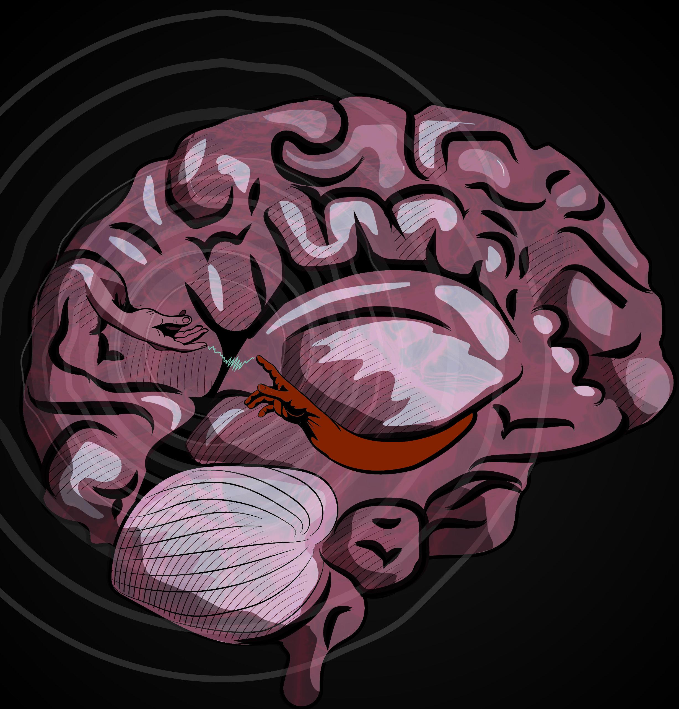 Wissenschaftler entdecken neuronale Mechanismen zentraler Bedeutung für die menschliche kostenloser Rückruf