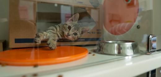 Ein Tag der Adoptionen und Happy Endings, bei der Fünften Jährlichen Klar sind die Tierheime Veranstaltung