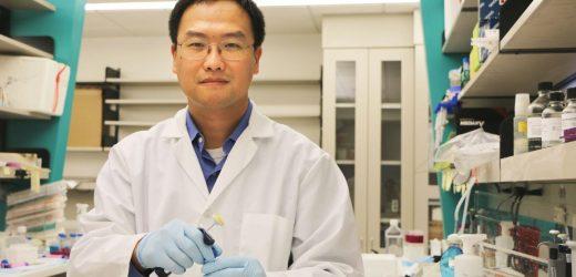 Diverse Immunzellen profile und Rollen finden sich in Brustkrebs-Resistenz-Immuntherapie