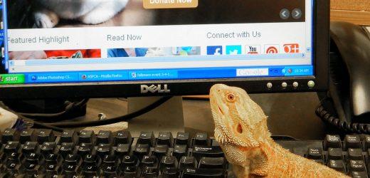 Pet Sicherheit Warnungen für Unsere Vogel-und Reptilien-Freunde