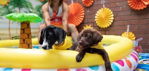 Bademeister: Ende Sommer mit Unseren Welpen-Pool-Party
