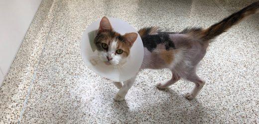 Die Rettung Rosie: Katze Gefunden mit Verätzungen Ist Jetzt in ASPCA Pflege