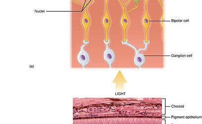 Ursache des kongenitalen nystagmus gefunden