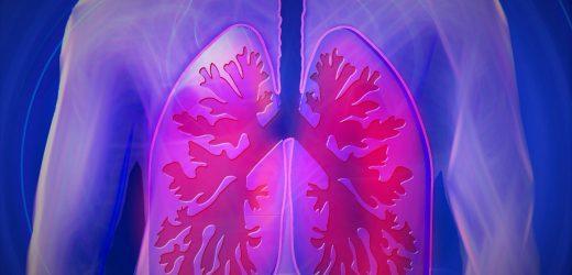 Identifizierung von neuen Populationen von Immunzellen in der Lunge