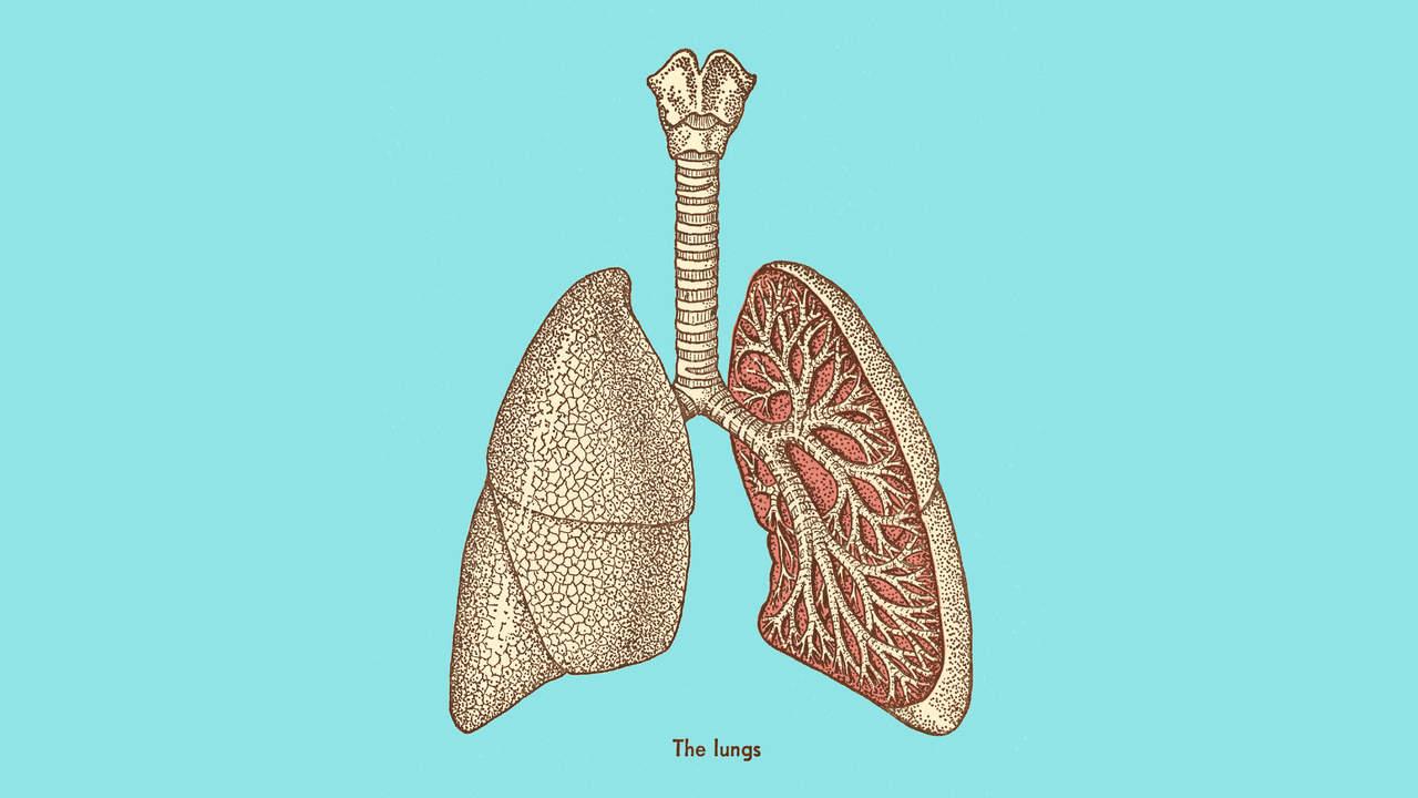 Also, Was Genau Ist Die Akute Bronchitis Und Wie Kann Man Es Verhindern?