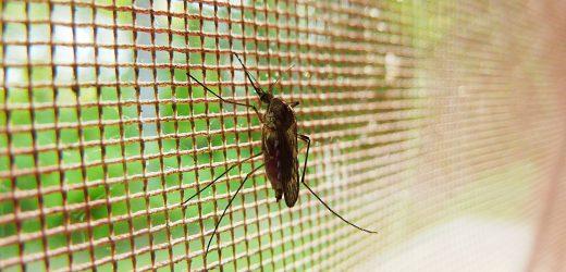 Malaria-Infektion ist assoziiert mit einem erhöhten Risiko von Herzinsuffizienz