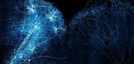 MouseLight Projekt Karten von 1.000 Neuronen (und zählen) im Gehirn der Maus