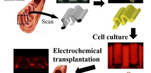 """Zugeschnitten """"cell sheets"""" zur Verbesserung der post-operativen Wunde zu schließen und heilen"""