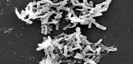 Die Behandlung von C.-difficile-Infektionen: Neue Nutzung für ein altes Medikament?