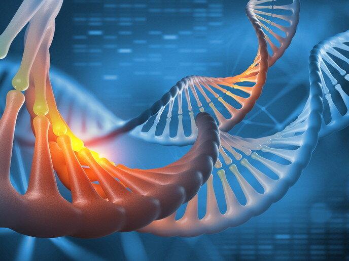 Unerwartete Hoffnung für DNA-Schäden-in Verbindung stehende Krankheiten