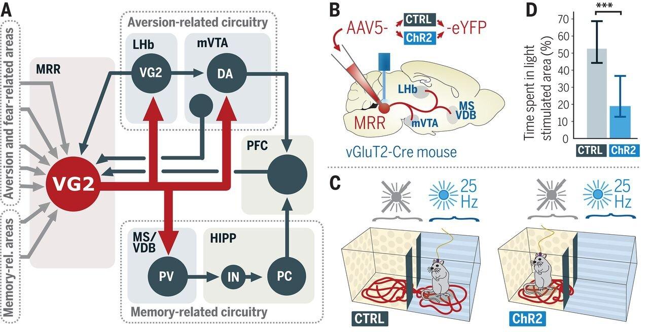 Identifiziert: Knotenpunkt im Hirnstamm von Mäusen, bewertet, verarbeitet und speichert negative Erfahrungen