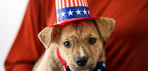 Morgen Ist Wahltag—Ihre Stimmen Zählen für die Tiere!