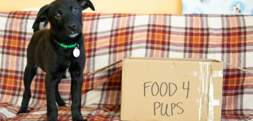 Host einer Facebook® Spendenaktion, um Tieren zu Helfen