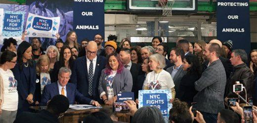 New York City Feiert eine Vielzahl von Neuen Tierschutz Gesetze