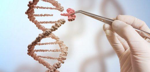 Genetische Verbesserung könnte bald möglich sein—aber wo ziehen wir die Linie?