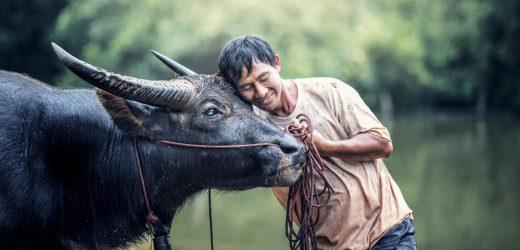 Neue Forschung zeigt Haustieren link-virus zu verbreiten unter den Menschen und die Tierwelt
