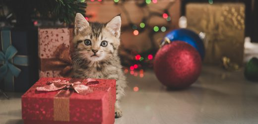 Unsere Ultimative Holiday Gift Guide, 2019 – Holen! Pet Care