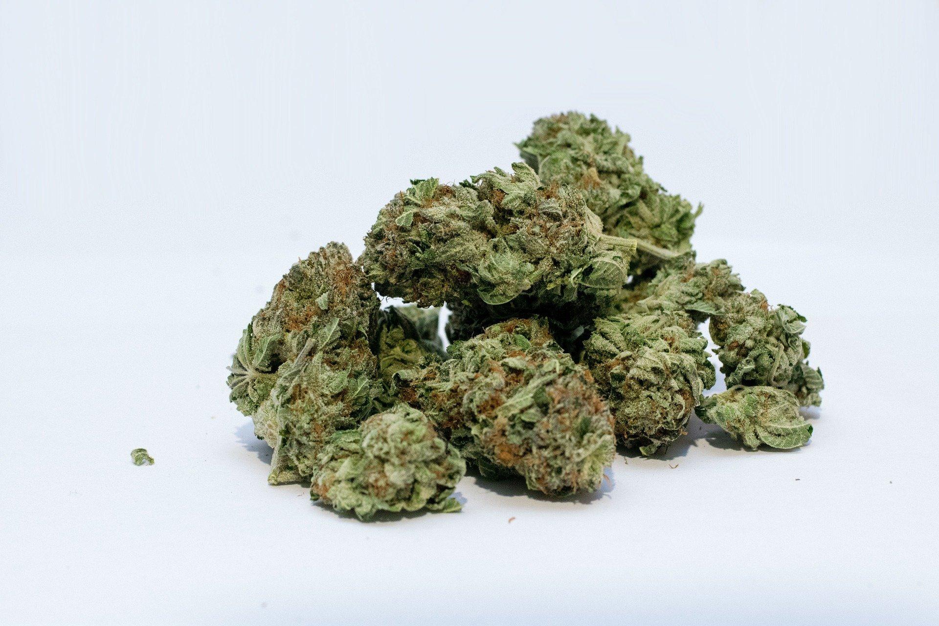 Erwachsene mit Schmerzen, ein höheres Risiko für Cannabiskonsum Störung, findet Studie
