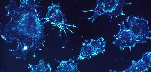 Eine einzelne Zahl hilft, die Daten, die die Wissenschaftler feststellen, dass die meisten gefährlichen Krebszellen