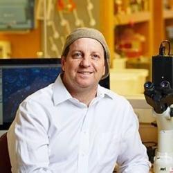 Forscher entwickeln neues Protokoll zu erzeugen, Darm-in-vitro-organoids