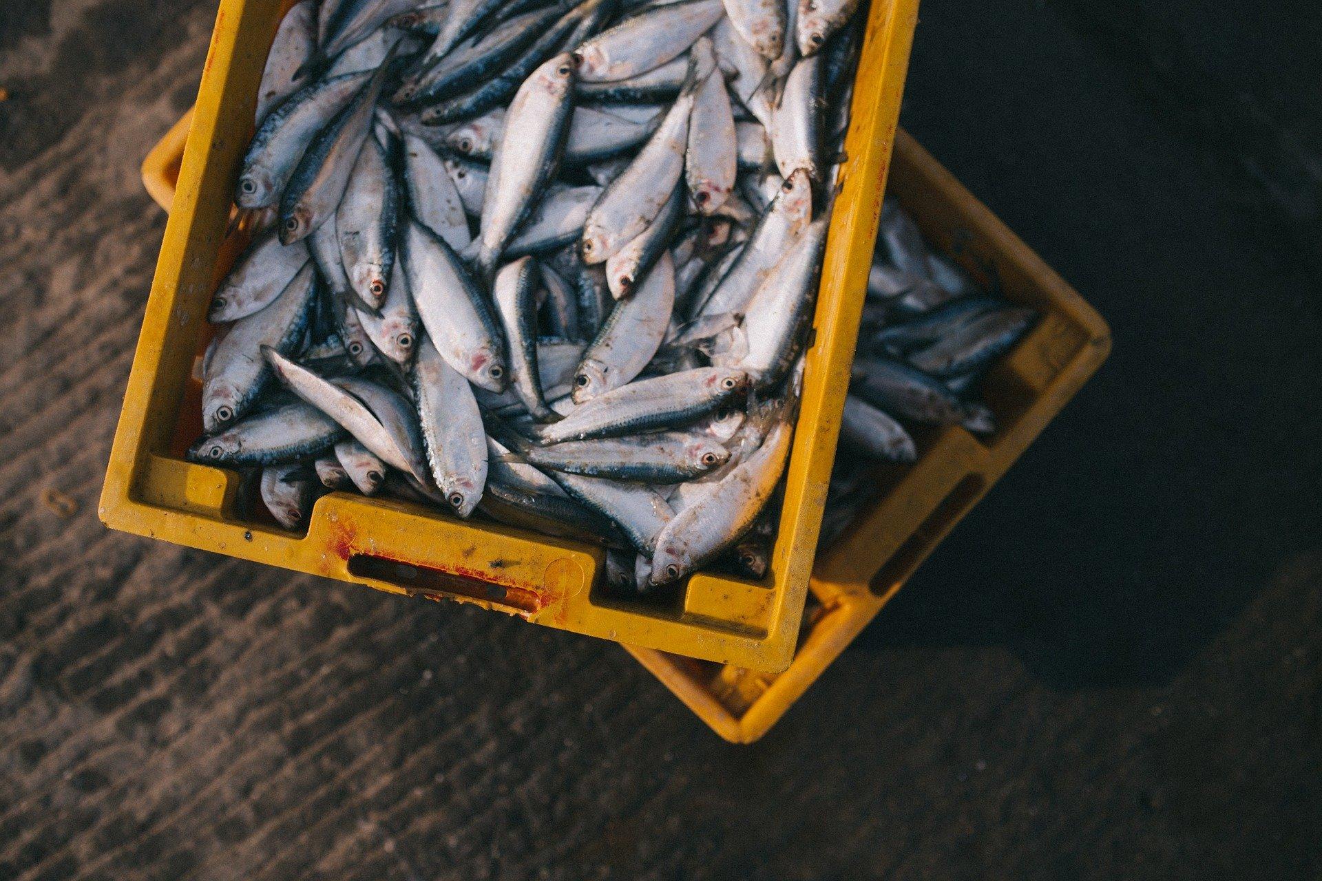 Quecksilber kann dämpfen die positive Auswirkungen auf die Gesundheit der Fische