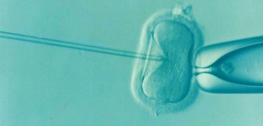 IVF-Zwillinge: zwei Herzen, vervierfachen das Risiko