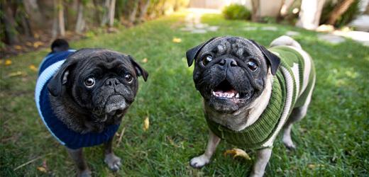 Promi-Haustier-Fotografin Grace Chon, die auf die Einnahme von das perfekte Foto von Ihrem Haustier zu Holen! Pet Care