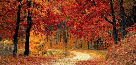 Studie: in den Späten Herbst kann die beste Zeit des Jahres, um zu versuchen zu begreifen