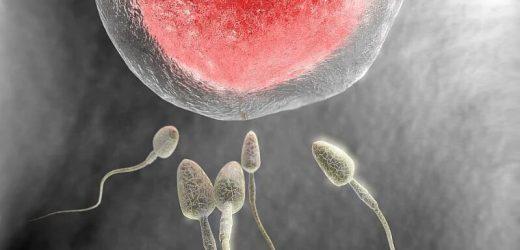 Perinatale Ergebnisse schlechter mit kryokonservierten Spender-Eizellen