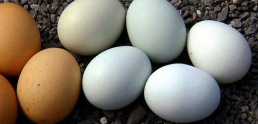 Weiße und braune Eier: So entsteht die Farbe