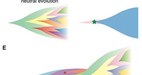 Das Verständnis der Vielfalt der Krebs-Entwicklung, basierend auf Computer-simulation