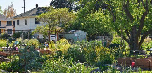 Mikrobiom-GoSee Tipp: rewilding: Biodiverse städtischen Grünflächen zu stärken das menschliche Immunsystem