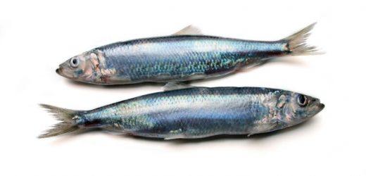 Ernährung: Drei gesunde und ungesunde Fischsorten – Naturheilkunde & Naturheilverfahren Fachportal