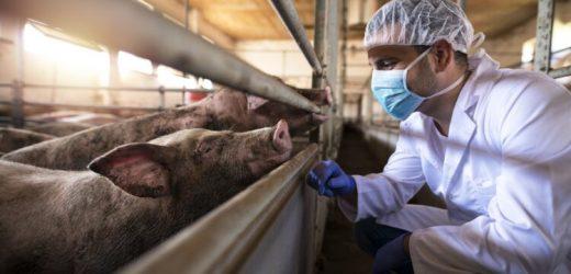 Coronavirus-Kreuzimmunität: Warum die Schweinegrippe milder verlief – Naturheilkunde & Naturheilverfahren Fachportal