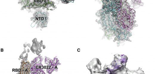 Studieren Sie die Krone des virus hinter COVID-19 zu finden sein schwacher Punkt