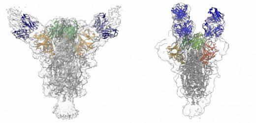 Neutralisierende Antikörper isoliert von COVID-19 Patienten kann das virus unterdrücken
