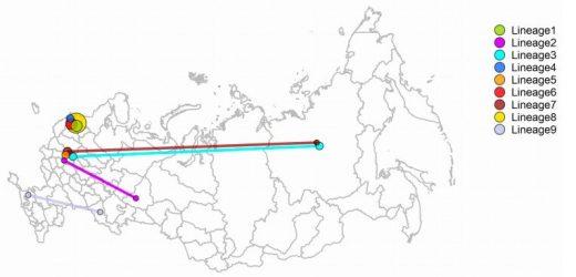 Russland ist COVID-19-Stamm nicht aus China kommen